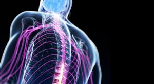 prevenzione infortuni sistema nervoso